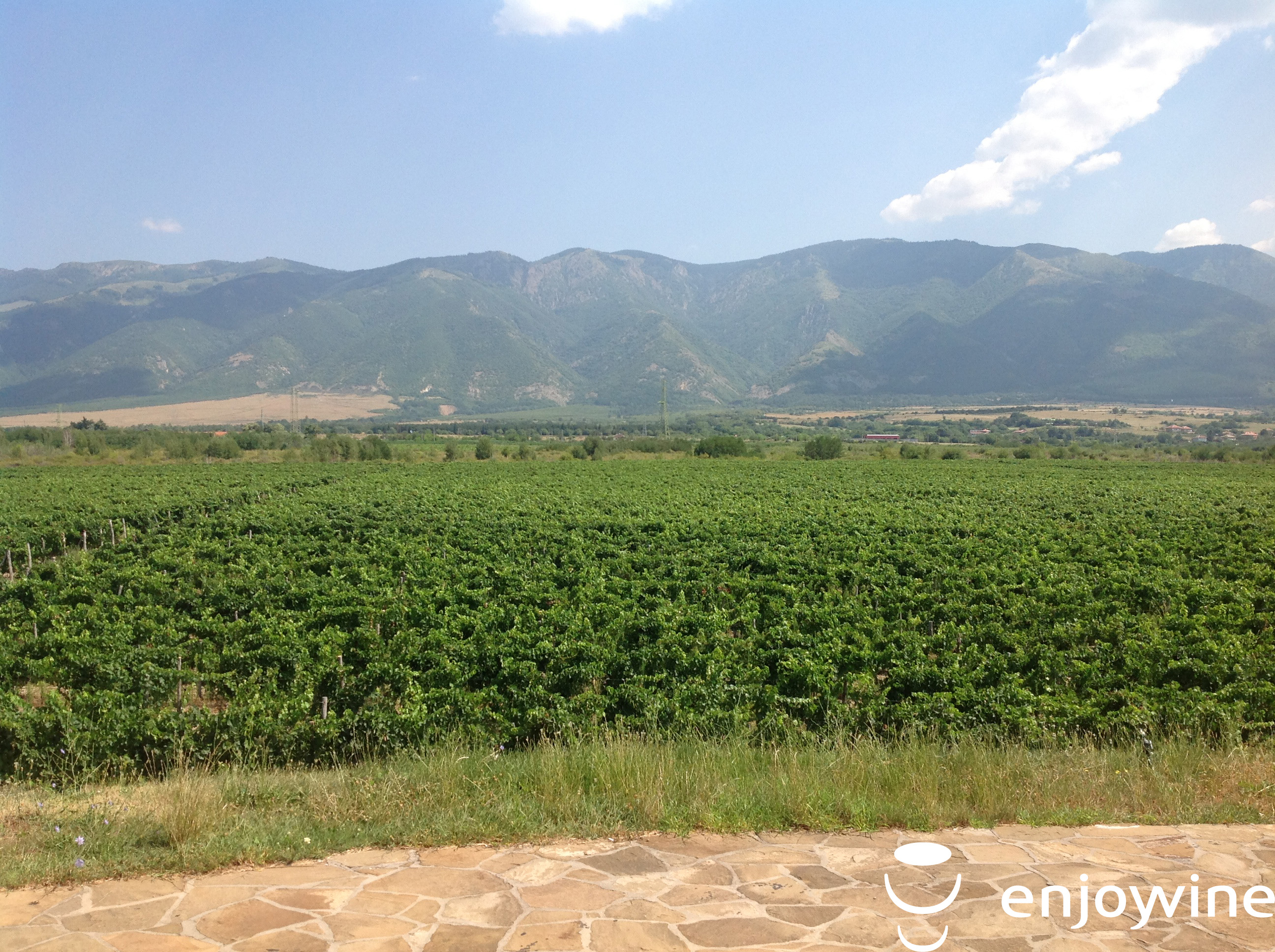 Wine tour Thracian plain