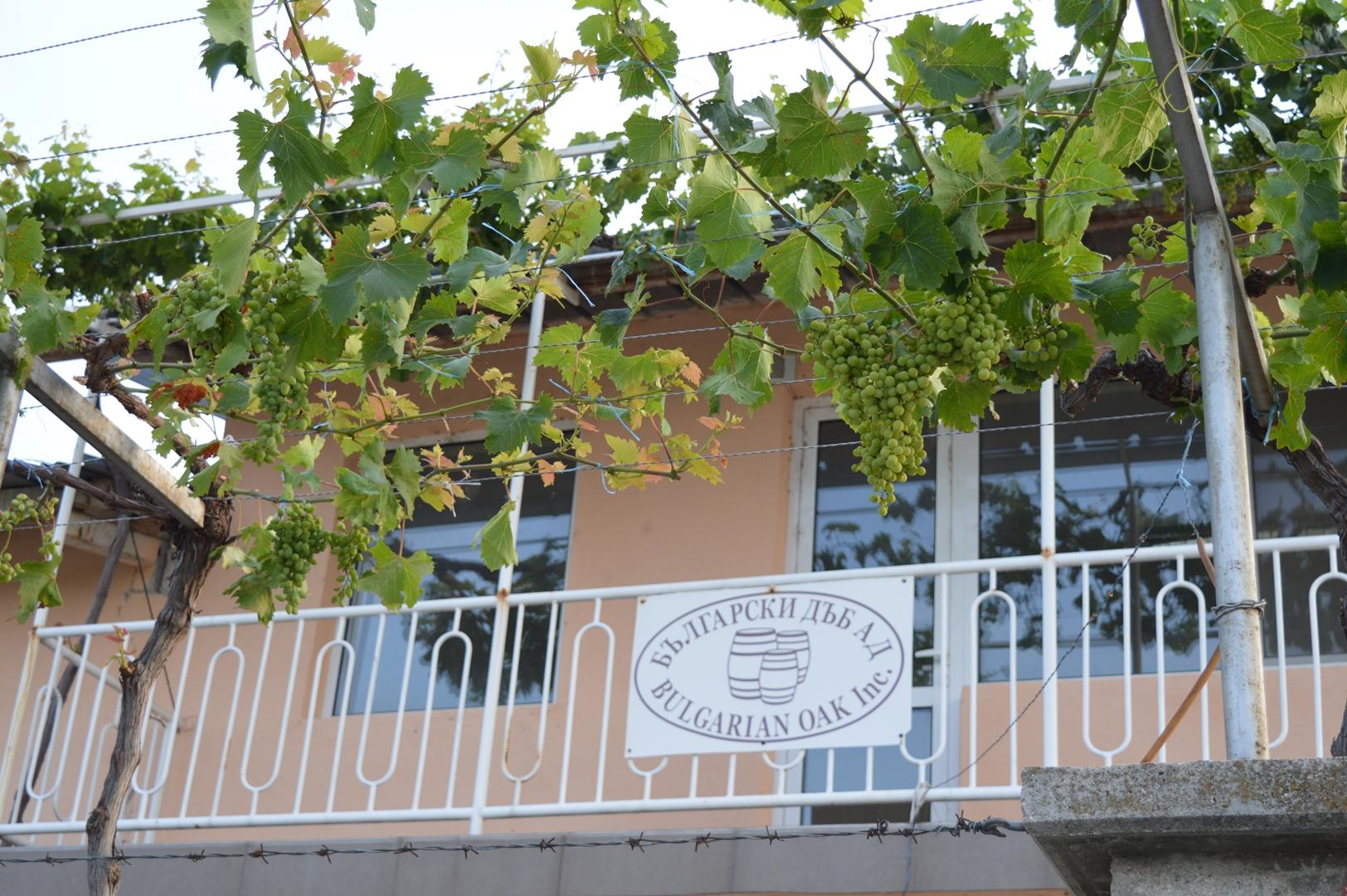 Българските бъчви от село Скутаре намират пазар във Франция