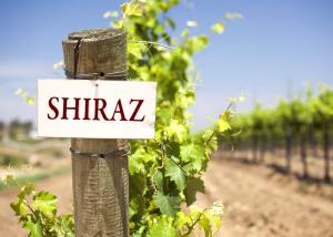 shiraz-vineyard