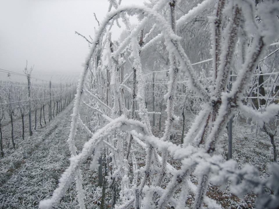 Позитивите за България от домакинството на Световния конгрес по лозарство и винарство