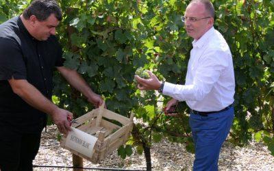 Министър Порожанов: Очакваме добра реколта от грозде тази година