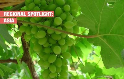 Винарската индустрия и борбата с климатичните промени