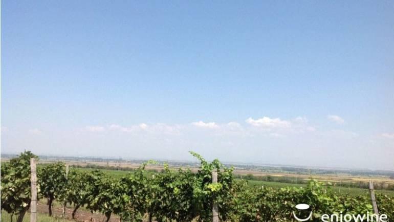 Над 300 проби вина и спиртни напитки се състезават за Златен ритон