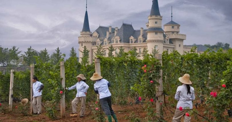 Бумът на винопроизводството в Китай