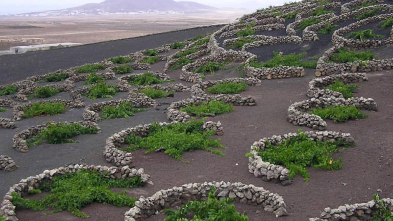 2018 – годината на вулканичните вина