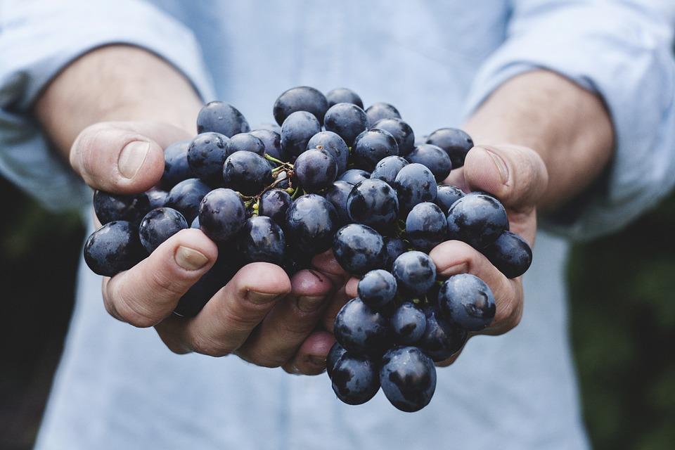 За очакваната реколта и цената на виното