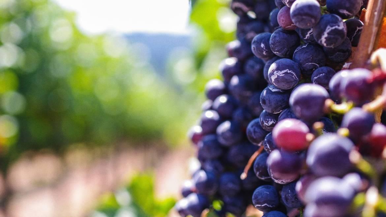 Над половината от българското вино се реализира на вътрешния пазар